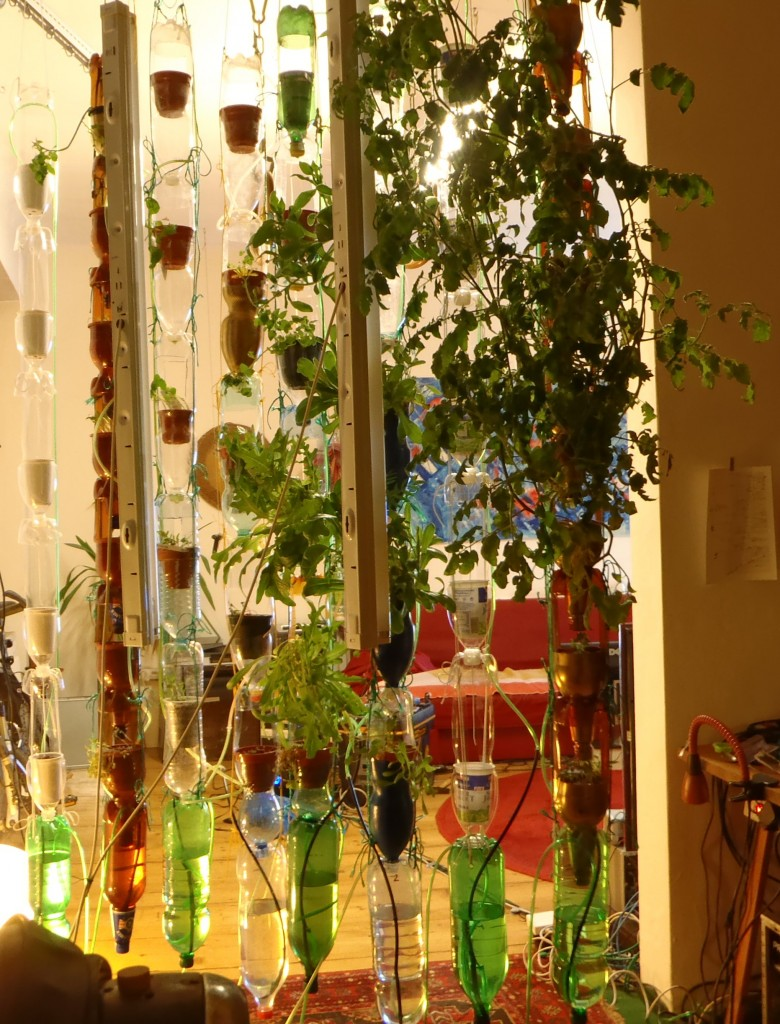 a windowfarm in Vienna